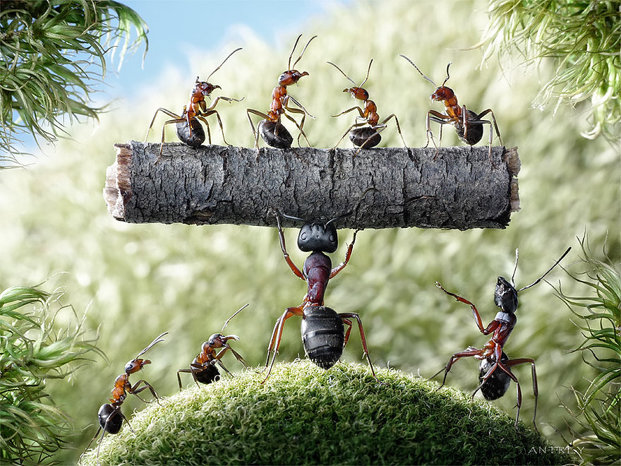 08-Hercules-Andrey-Pavlov-Photographs-of-Ants-an-Affordable-Journey-to-a-Parallel-World