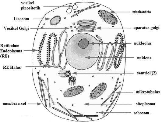 Ruang Belajar Siswa Kelas 1 Organel Sel