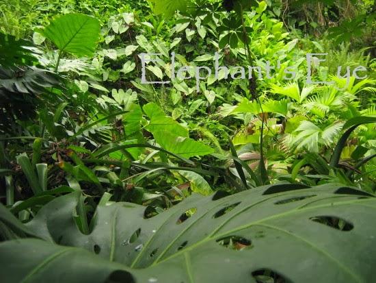 Eden Project rain forest