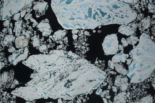 All polar bears across the Arctic face shorter sea ice season