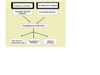 Leso celular textos sobre fisiopatologia httpenpediawikicomplementsystem ccuart Image collections