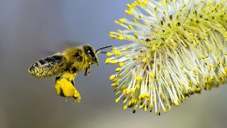 arılar yok olursa, arılar polenleyemezse, bitki döllenmesi olmazsa