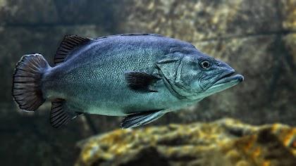 معلومات وحقائق غريبة جدا عن الاسماك سوف تدهشك