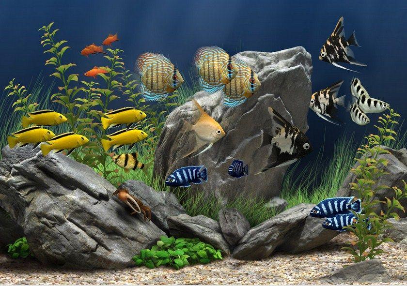 Manfaat Memelihara Ikan Hias Aquarium Dirumah
