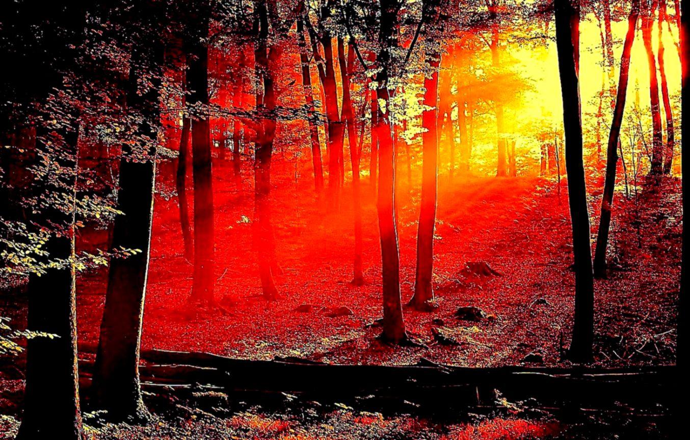 Red Wallpaper Dark Forest Hd