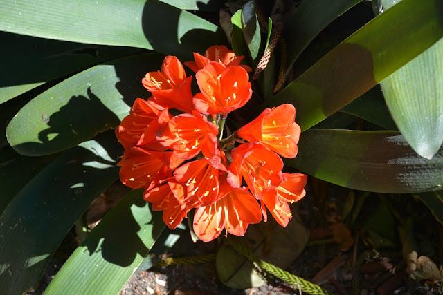 Alameda Apocada Gardens Cadiz flowers