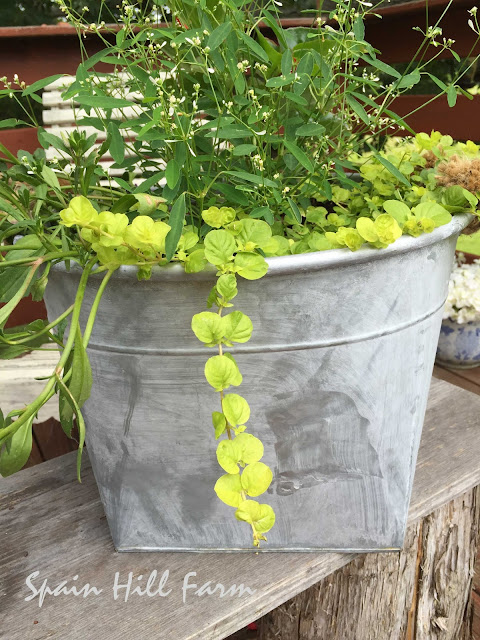 beautiful galvanized container garden