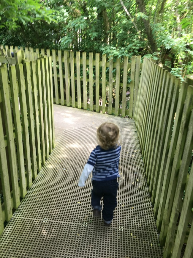 toddler-walking-away-between-high-fence-at--Perrygrove-Railway-adventure-playground