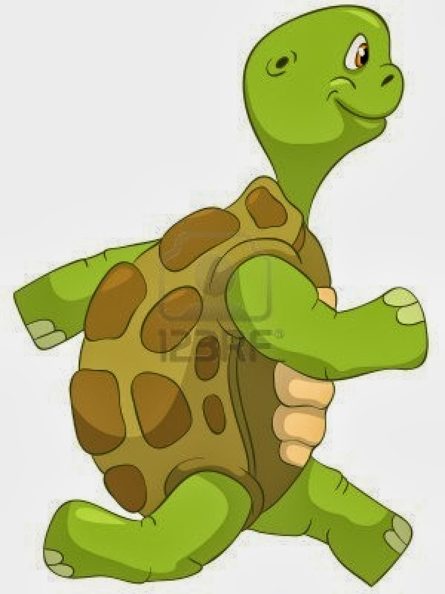 Rules Of The Jungle Funny Turtle Pictures