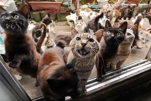 musi di gatti