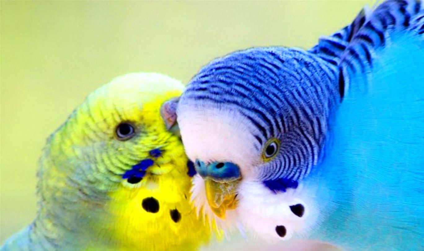 Parrot Blue Bird Hd Wallpaper Best Beach Pictures