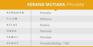 klasifikasi kerang mutiara