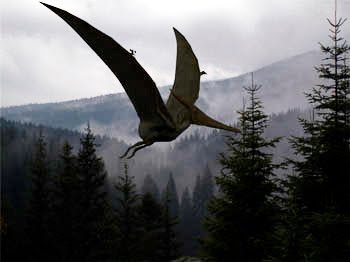 Pteranodon2 - LOS PTERODÁCTILOS AÚN SIGUEN VIVOS