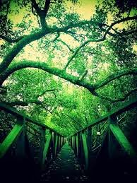 Hutan Bakau Mangrove Margomulyo Balikpapan | Lokasi Pariwisata