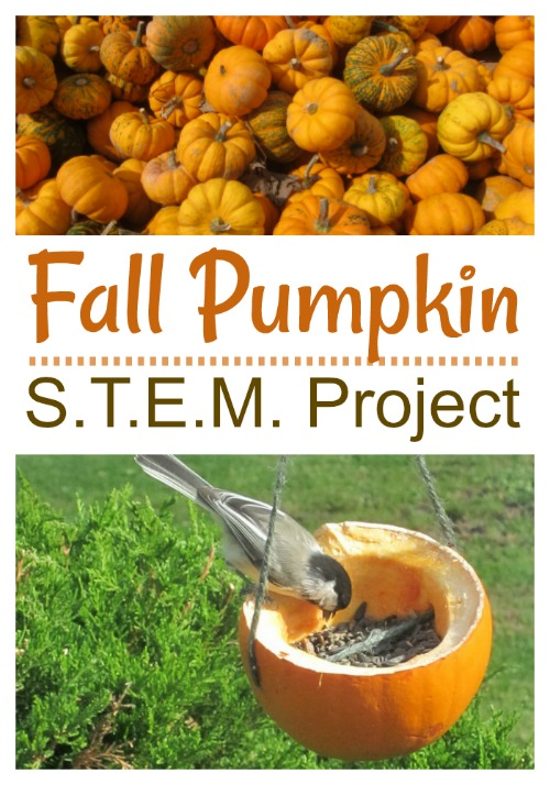 Fall Pumpkin STEM Project-could be used with gourds