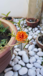Orange flowers collection, orange flowers, orange garden, orange theme flowers, orange bouquet, garden