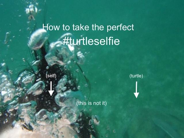 USVI turtles