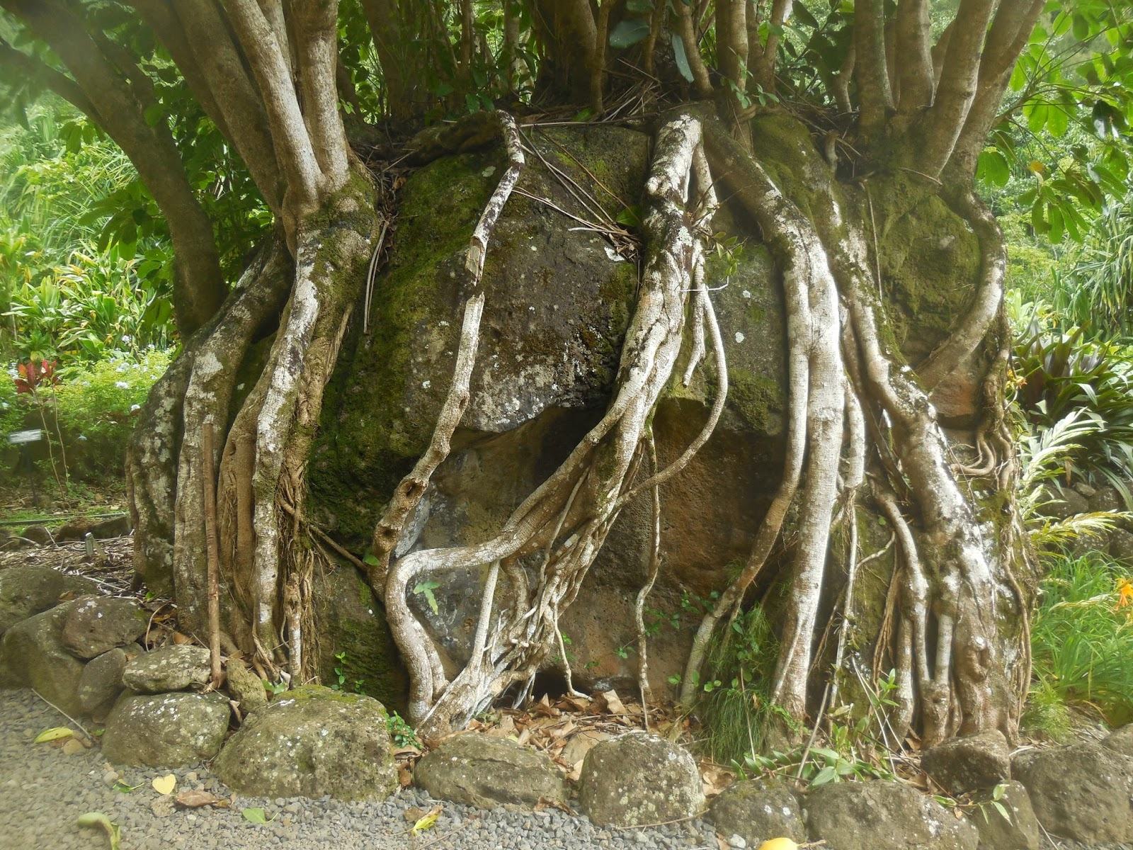 Wanderings of the old sloat: Limahuli Gardens