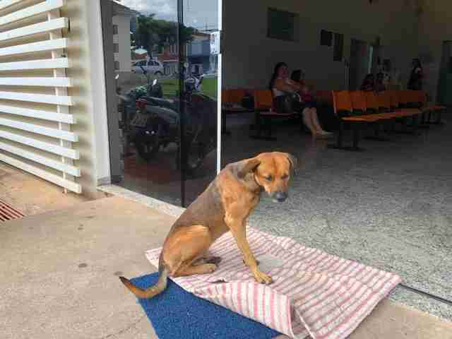 Perro espera en un hospital a dueño que murió acuchillado