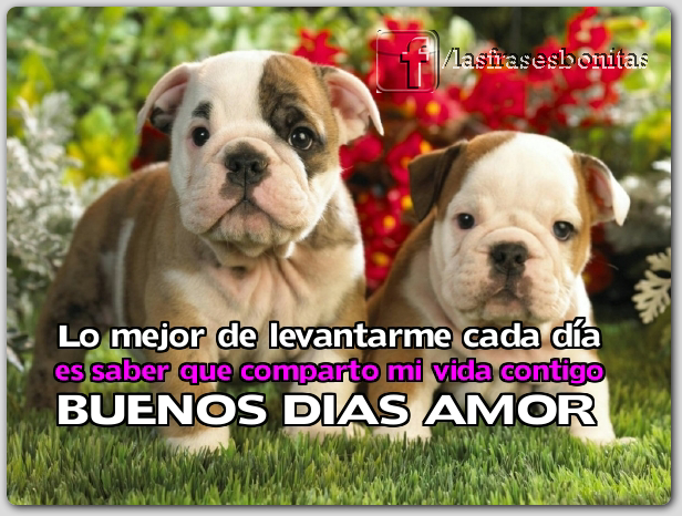 Imagenes de Buenos Dias - Frases Para dedicar