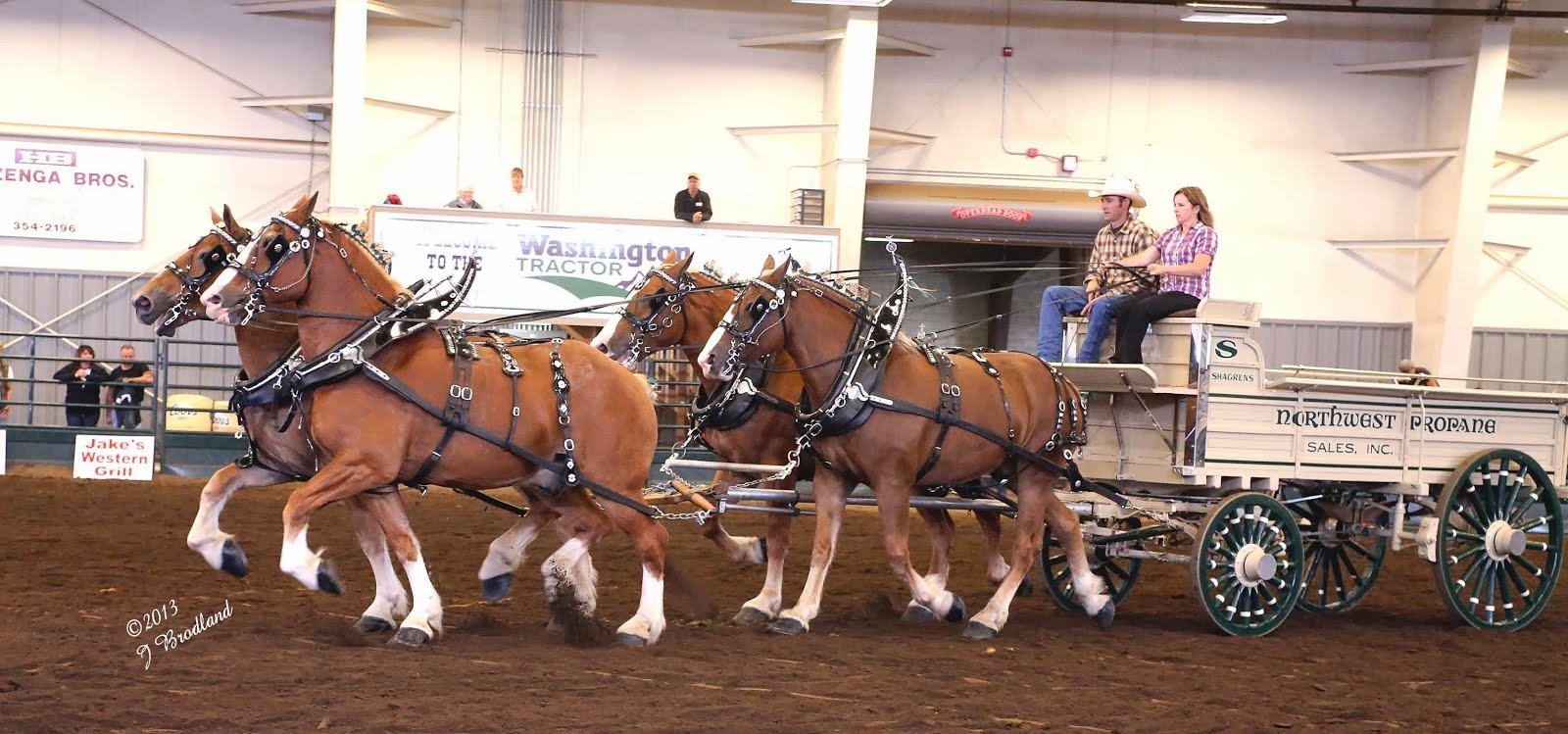 Eaglesfield Percherons Sunny Saturday At The Alberta