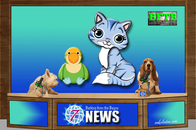 BFTB NETWoof News reports on cat and bird friendship