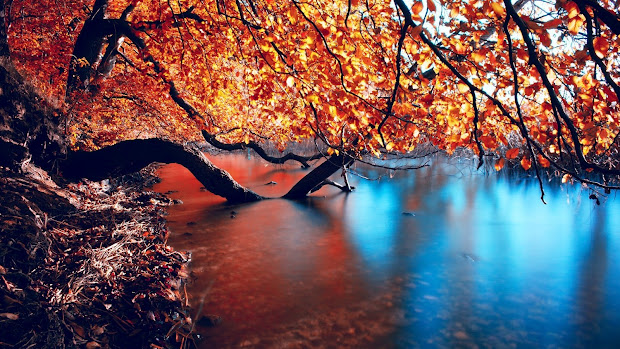 Fall Autumn Desktop Wallpaper 1920X1080