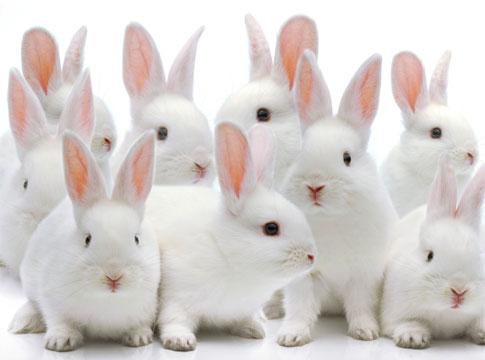 Listado de compañias que TESTAN CON ANIMALES