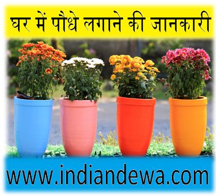 घर में पौधे लगाने की जानकारी