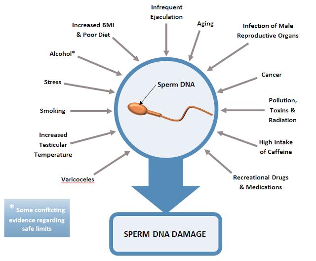 Fragmentasi DNA sperma penyebab teratozoospermia