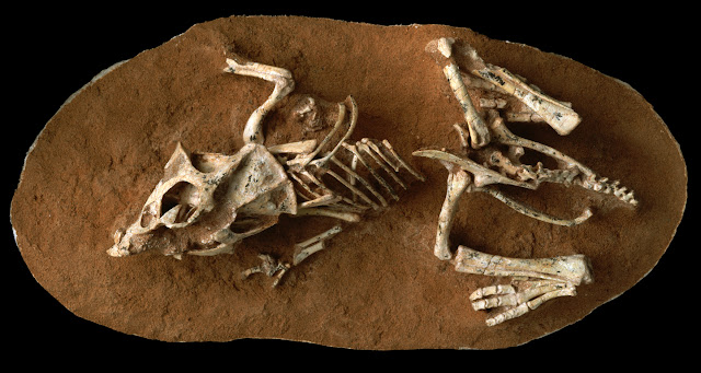 How long did it take to hatch a dinosaur egg? Study says 3-6 months