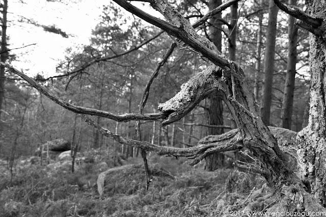Le squelette du Dragon, Franchard, Fontainebleau