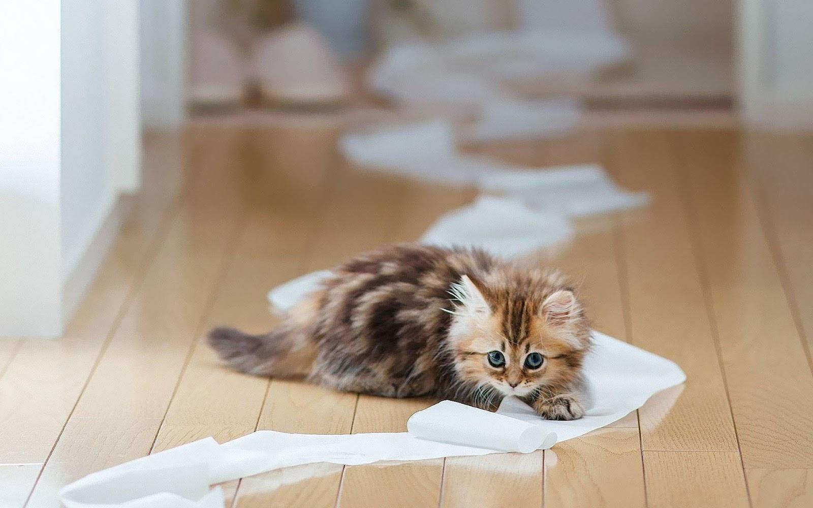 F Savannah Cat Reviews