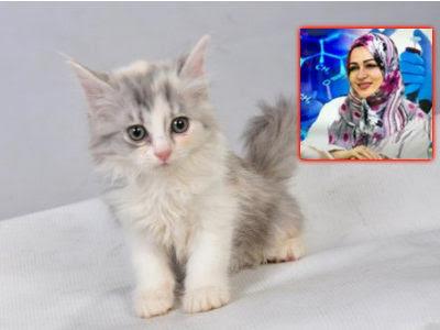 الدكتورة نجوى محمد موسى الصاوي : حساسية القطط فى المنازل