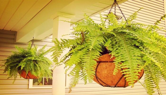 Bellas plantas que no necesitan luz