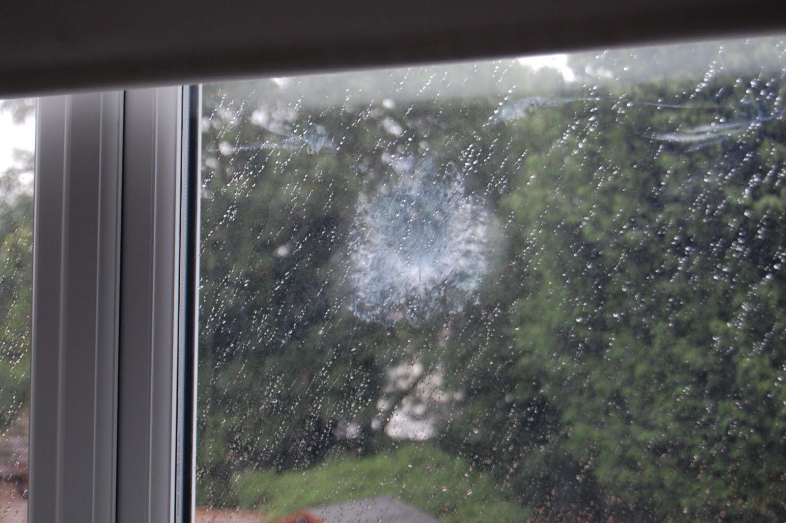 beclounor: Think a bird flew into my window