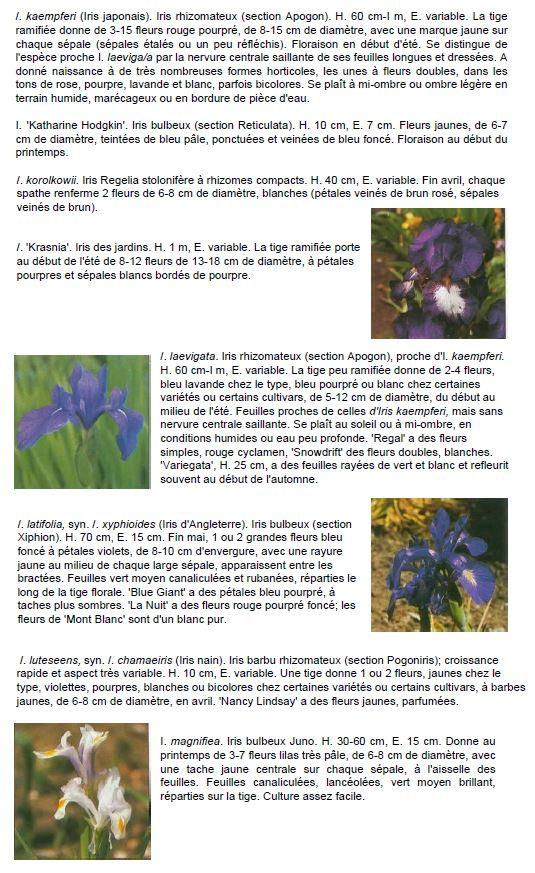 Breuillet Nature: Tout savoir sur les Iris