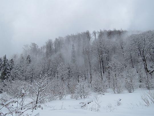 Śnieżny pył zwiewany z drzew.