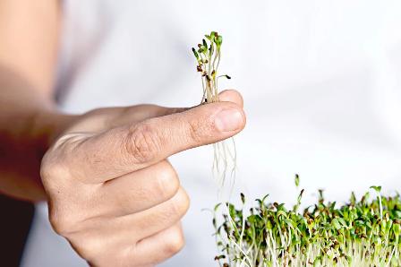 'Sprouting' Adalah Yang Paling Sehat (Dan Paling Tidak Mahal) Yang Dapat Anda Lakukan Untuk Kesehatan Otak Anda