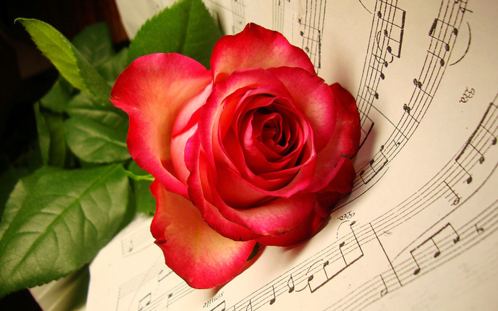 Red Rose HD Wallpapers For Wide Desktop Laptop Screen ~ Get All Kind of Tips and Software, Free ...