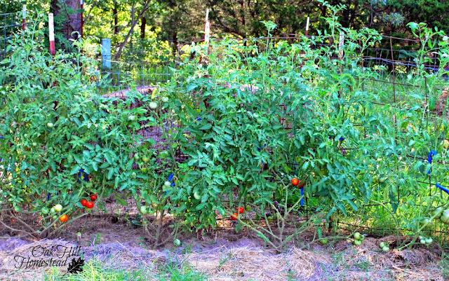 My attempt at deep-mulching the garden. It didn't work for long.