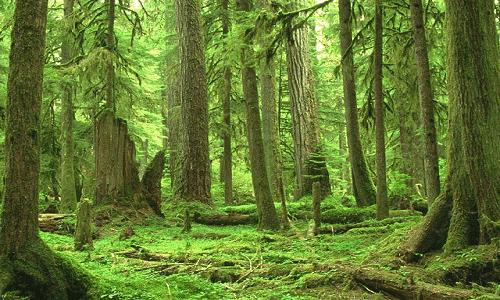 Tayga Ormanları Nerede