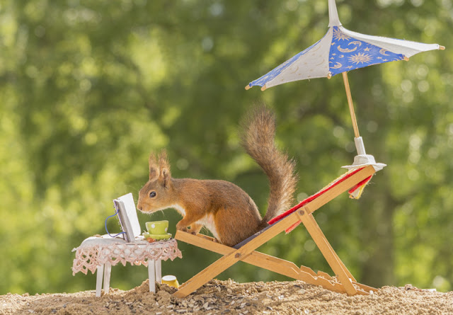 A summer reading list from Companion Animal Psychology. The list is illustrated by a photo of a squirrel on a deck chair reading a book