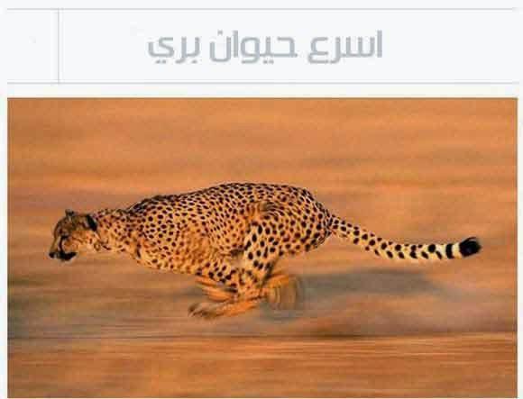 أسرع حيوان