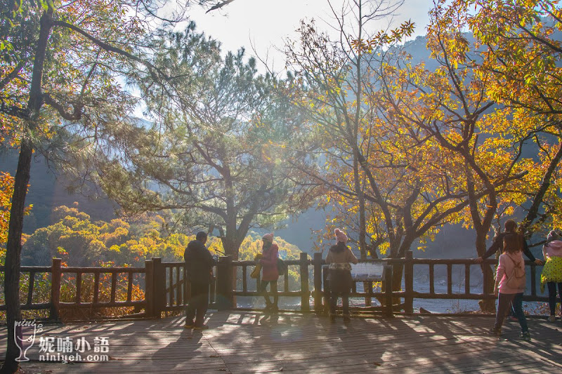 【奧萬大景點】 奧萬大國家森林遊樂園區路線。賞楓賞松還能賞櫻花