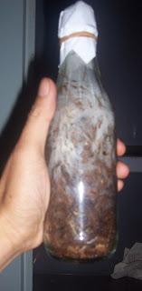 bibit F2 jamur bogor