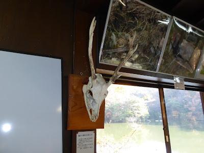 奈良県の大峰山系の断崖の下で収集された若鹿