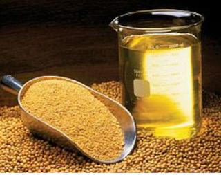 فوائد الحلبه بالعسل الاسود علي الريق،الحلبة والعسل للوجه،الحلبة والعسل للكلف،مشروب الحلبه بالعسل،