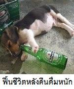ฟื้นชีวิตหลังคืนดื่มหนัก