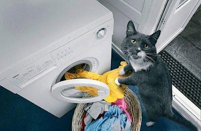 ArtOmega: Unik & Lucu Kucing Jadi Pembantu Rumah Tangga
